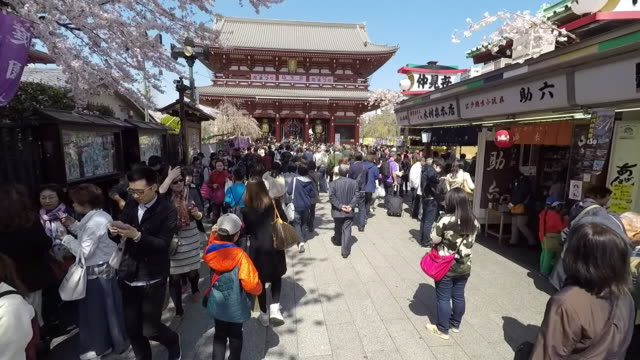 cherry blossom festival in tokyo - japanese culture stock videos & royalty-free footage