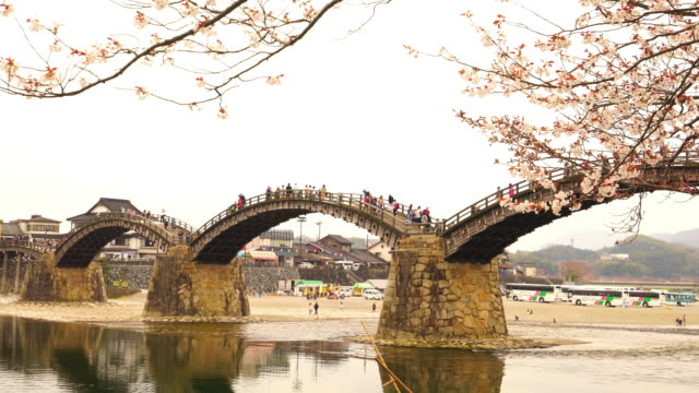 cherry blossom full bloom at kintaikyo bridge - hiroshima prefecture stock videos and b-roll footage