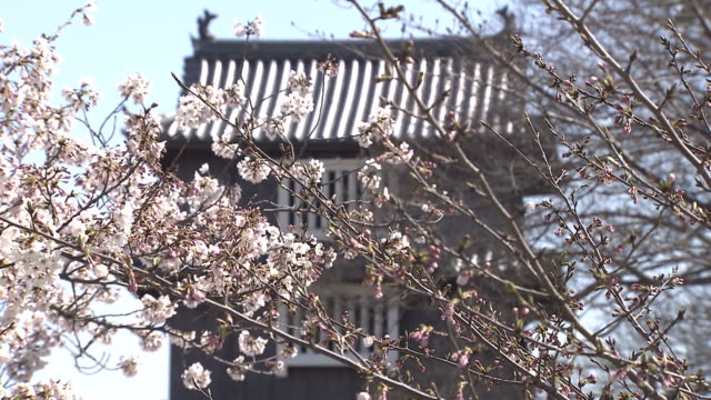 cherry blossom in japan - fukuoka prefecture stock videos & royalty-free footage