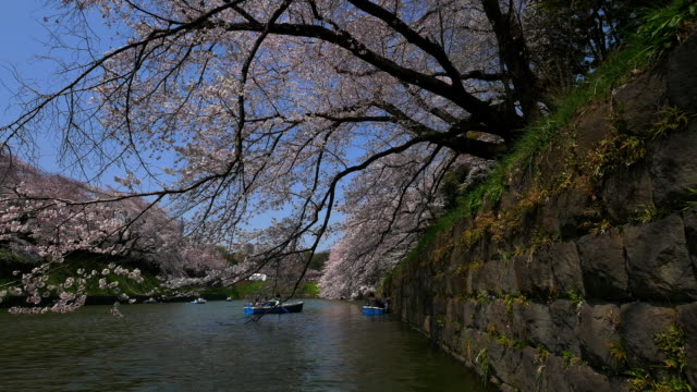 cherry blossom on the boat from chidorigafuchi - kanto region stock videos and b-roll footage