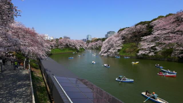 cherry blossom pan shot from chidorigafuchi - kanto region stock videos and b-roll footage