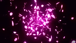 Cherry Blossom Petals Falling on Pink Background, Loop Glitter Animation,