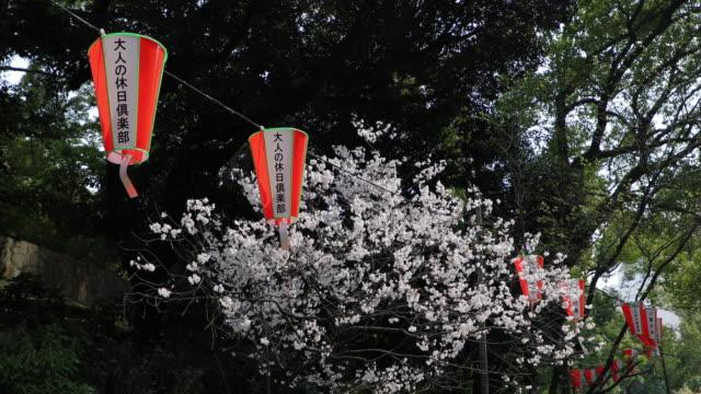 桜、桜 - 四月点の映像素材/bロール