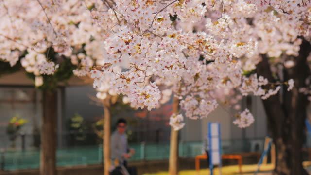 桜、桜 - 文化点の映像素材/bロール