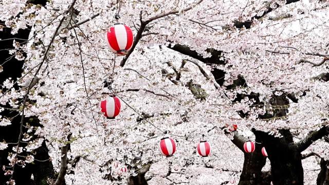 北海道の季節の春・桜の花桜 - 四月点の映像素材/bロール