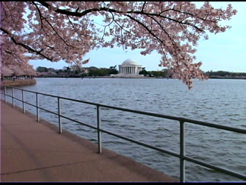 vídeos de stock e filmes b-roll de cherry blossom tree by jefferson memorial, washington dc - atlântico central eua