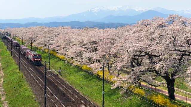 日当たりの良い day.nature と景観概念の川沿い桜並木 - 桜の花点の映像素材/bロール
