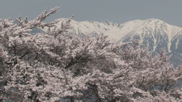 vídeos de stock, filmes e b-roll de cherry blossom trees and mountains covered with snow - prefeitura de fukuoka