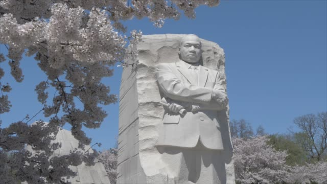 vidéos et rushes de cherry blossom trees around martin luther king jr. memorial, washington dc, united states of america, north america - monument