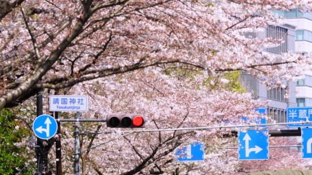 cherry blossom trees surround the traffic signal at yasukuni doori. road sign indicates yasukuni shrine. - segnaletica stradale video stock e b–roll