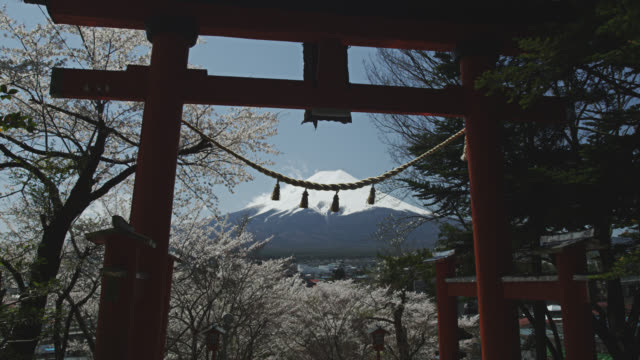 cherry blossom with mount fuji - mt fuji stock videos & royalty-free footage