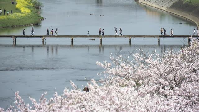 cherry blossoms along ongagawa, fukuoka, japan - fukuoka prefecture stock videos and b-roll footage