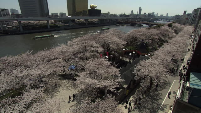 Cherry Blossoms Along Sumida River, Tokyo, Japan