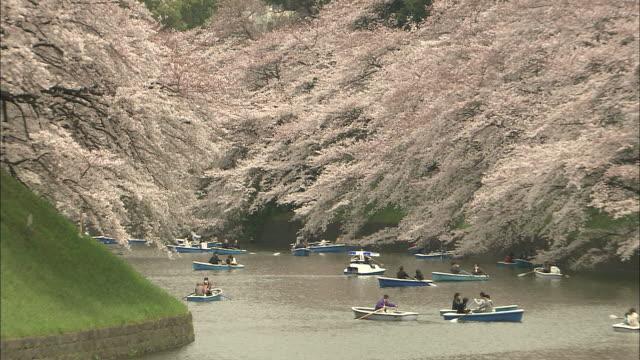 zo ws cherry blossoms and boats on chidorigafuchi moat path, marunouchi, tokyo, japan - kanto region stock videos and b-roll footage