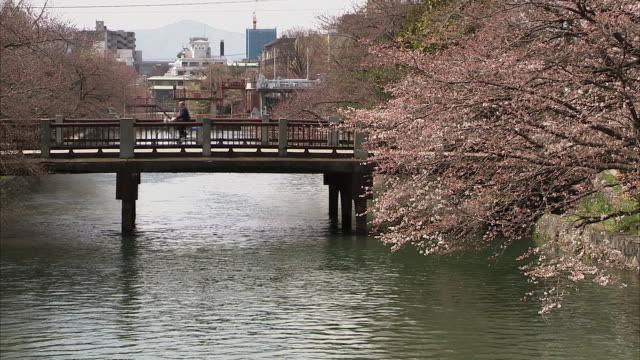 MS Cherry blossoms and bridge on canal, Kyoto, Japan