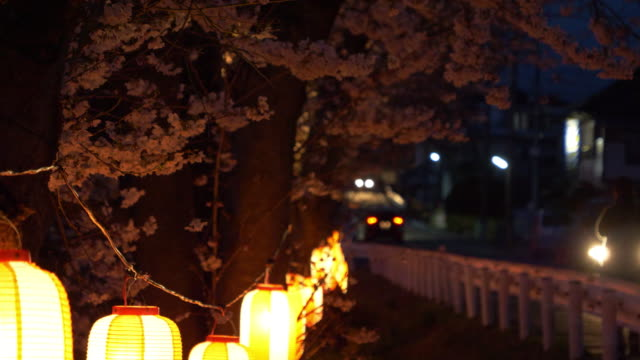 vídeos de stock, filmes e b-roll de cherry blossoms and chochin lanterns swaying in the wind at night as cars passing by. - inclinar