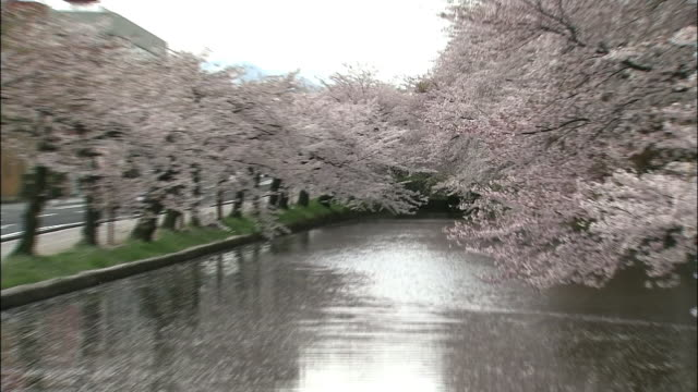 cherry blossoms and hirosaki castle - 城点の映像素材/bロール