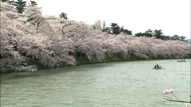 cherry blossoms and hirosaki castle - moat stock videos and b-roll footage