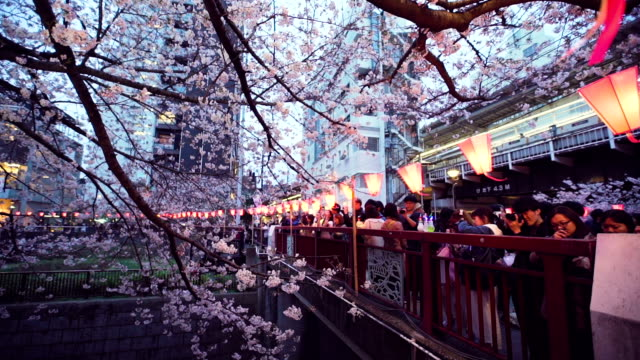 Cherry blossoms and Meguro River in Tokyo,Japan