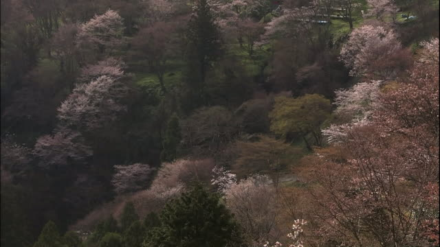 cherry blossoms and mount yoshino - nara prefecture stock videos and b-roll footage