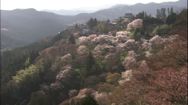 cherry blossoms and mount yoshino - nara prefecture stock videos & royalty-free footage