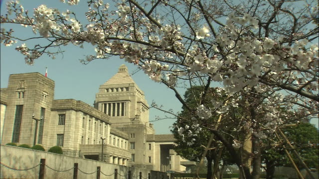 cherry blossoms and national diet building - parliament building stock videos & royalty-free footage