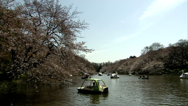 ws cherry blossoms and people in pedal boats on river in inokashira park, kichijo-ji, tokyo, japan - pedal boat stock videos and b-roll footage