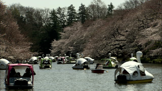ws cherry blossoms and people in pedal boats on river in inokashira park, kichijo-ji, tokyo, japan - animal representation stock videos & royalty-free footage