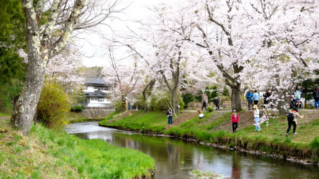 cherry blossoms and tranquil river at oshino hakkai, slow motion shot - oriental garden stock videos and b-roll footage