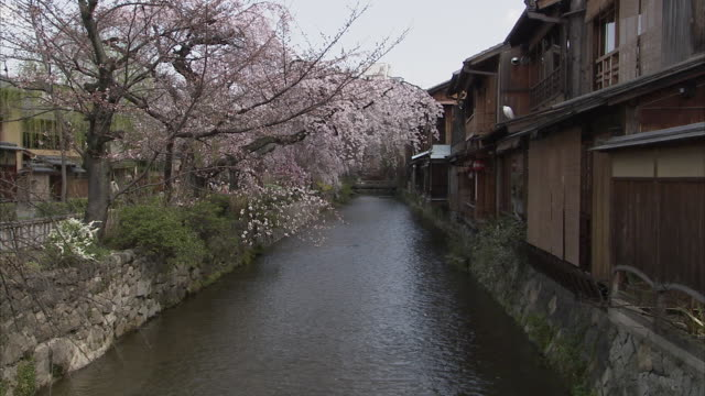 ms zo ws cherry blossoms and wooden houses along canal, gion, kyoto, japan - gion stock videos and b-roll footage