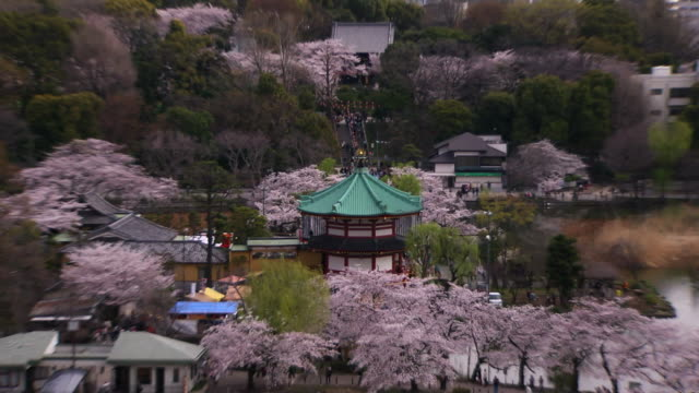 cherry blossoms around shinobazu pond, tokyo, japan - shinobazu pond stock videos and b-roll footage