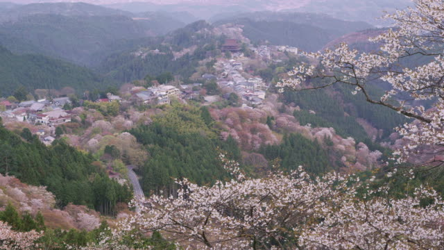 cherry blossoms at mt. yoshino - nara prefecture stock videos & royalty-free footage