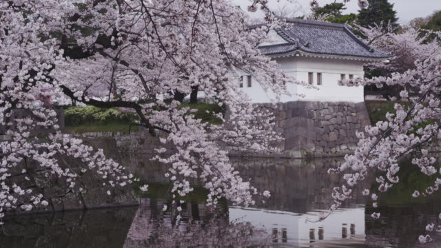 cherry blossoms at odawara castle in japan - 城点の映像素材/bロール