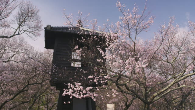 cherry blossoms at takato castle site - nagano prefecture stock videos and b-roll footage
