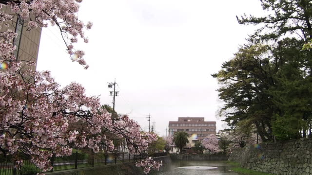 cherry blossoms at tsu castle's moat, mie, japan - moat stock videos & royalty-free footage