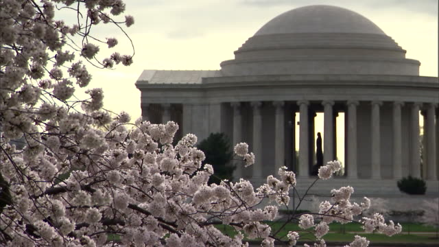 Cherry blossoms bloom in front of the Jefferson Memorial in Washington, D.C.