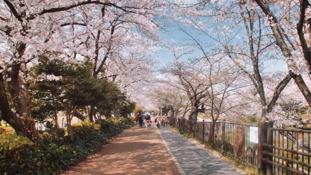 ws, cherry blossoms by the yamazaki river, people walking by - von bäumen gesäumt stock-videos und b-roll-filmmaterial