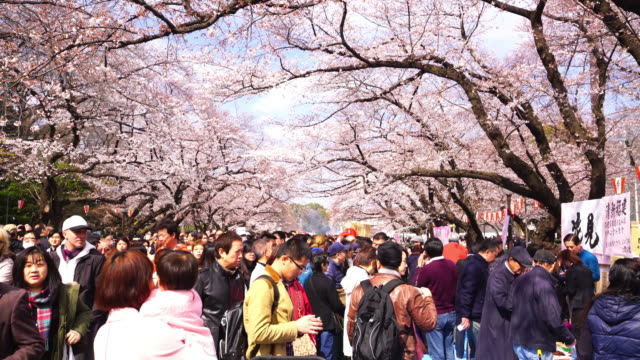 Kirschblüten-Festival in Ueno Park Tokyo