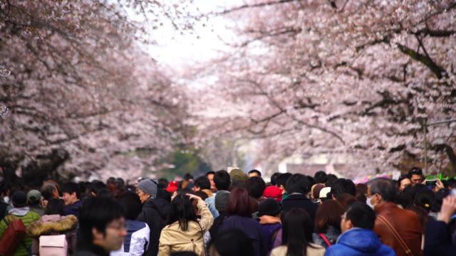 vídeos de stock e filmes b-roll de cherry blossoms festival in ueno park tokyo - flor de cerejeira