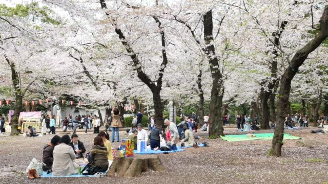 Körsbärsblommorna festival i Ueno Park Tokyo