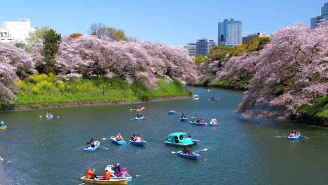 cherry blossoms in chidorigafuchi park public park in tokyo japan , slow motion - castle stock videos & royalty-free footage