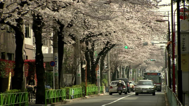 MS DS, Cherry blossoms in residential area, Meguro, Tokyo, Japan