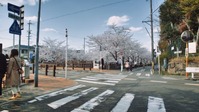 vídeos de stock e filmes b-roll de ws, cherry blossoms near the yamazaki river, people walking by a road crossing - árvore de folha caduca