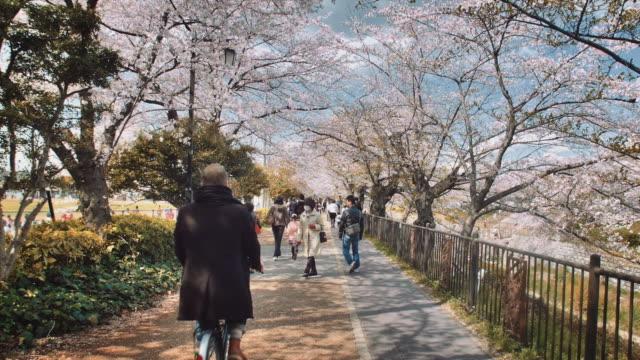 ws, cherry blossoms near the yamazaki river, people walking by - von bäumen gesäumt stock-videos und b-roll-filmmaterial