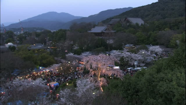cherry blossoms of gion, kyoto at night - gion stock videos and b-roll footage