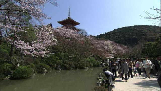 cherry blossoms of kiyomizu temple - 寺院点の映像素材/bロール