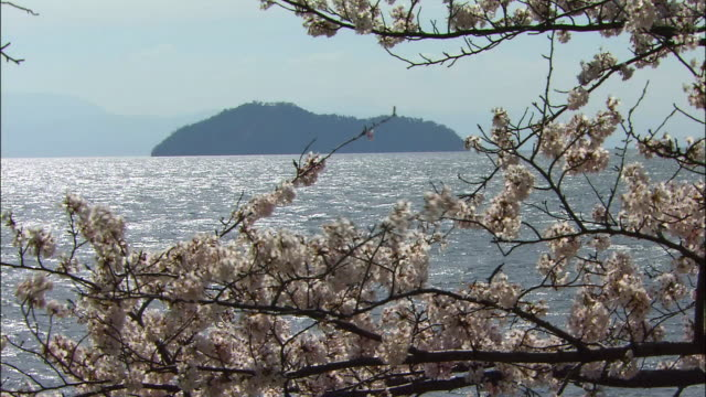 cherry blossoms of lake biwa - shiga prefecture stock videos & royalty-free footage