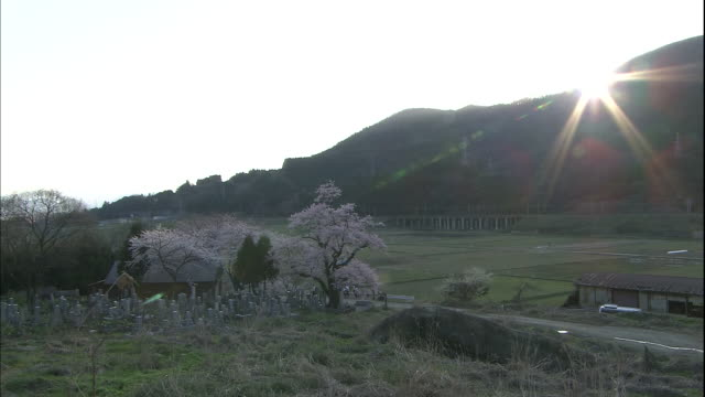 cherry blossoms of shozu. - satoyama scenery stock videos & royalty-free footage
