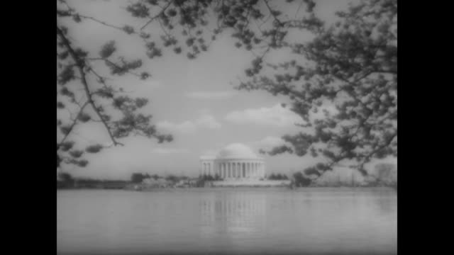 cherry blossoms over the potomac with thomas jefferson memorial in background - potomac river stock-videos und b-roll-filmmaterial