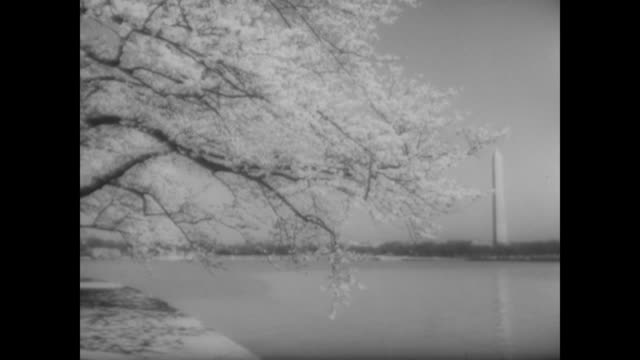 cherry blossoms over the potomac with washington monument in background - potomac river stock-videos und b-roll-filmmaterial